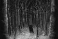 "Paysage D'Hiver - ""Im Wald"" (2020)"